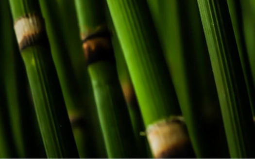 bamboo plants indoor